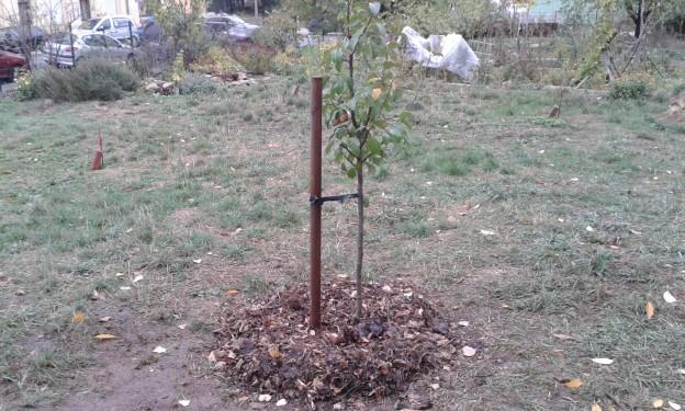 1. Obstbaumlebensgemeinschaft