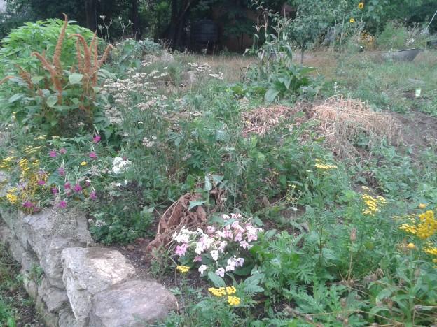 Neues Beerenbeet mit Bgleitpflanzung